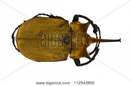 Beetle isolated on white background. Macro image.