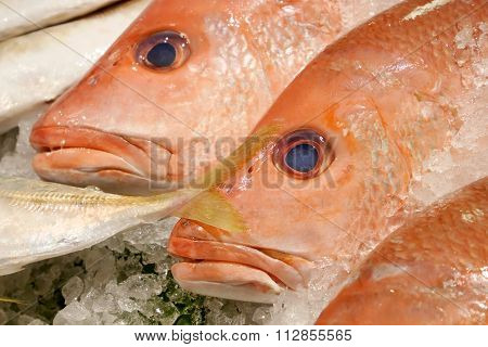 The fresh red snapper fish