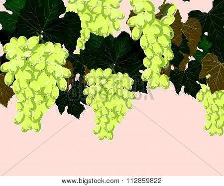 Grapes clusters