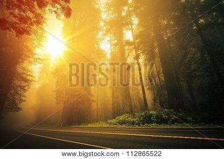 Redwood Foggy Sunset
