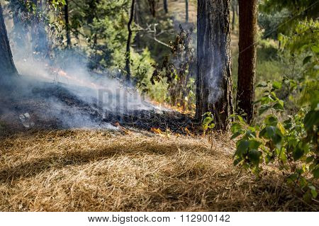 Spreading Wildfire In Hills