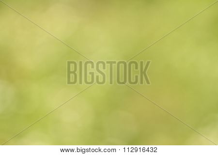 Abstract bokeh green background. Photography at sunny day