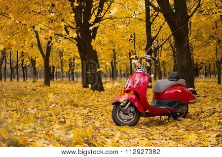 Vintage motorcycle in the autumn forest.