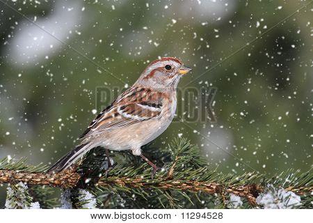 American Tree Sparrow In A Light Snowfall