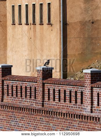 Crow sitting on ancient walls of enbankment in Wroclaw, Poland