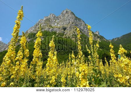 jagger rock formation and yellow flowering in Grebaje Valley, Montenegro poster