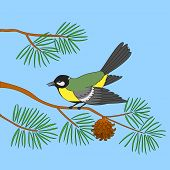 Bird titmouse sitting on a branch of a pine against the blue sky poster