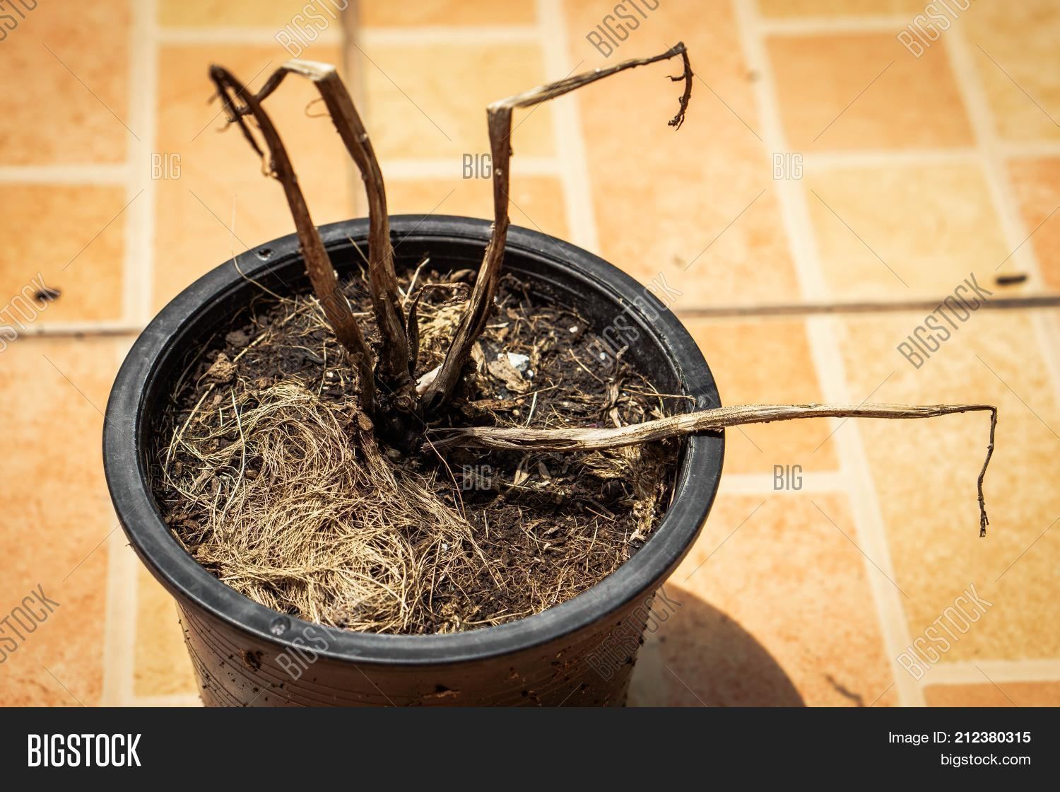 Dead Plant Dry Leaves Image & Photo (Free Trial) | Bigstock