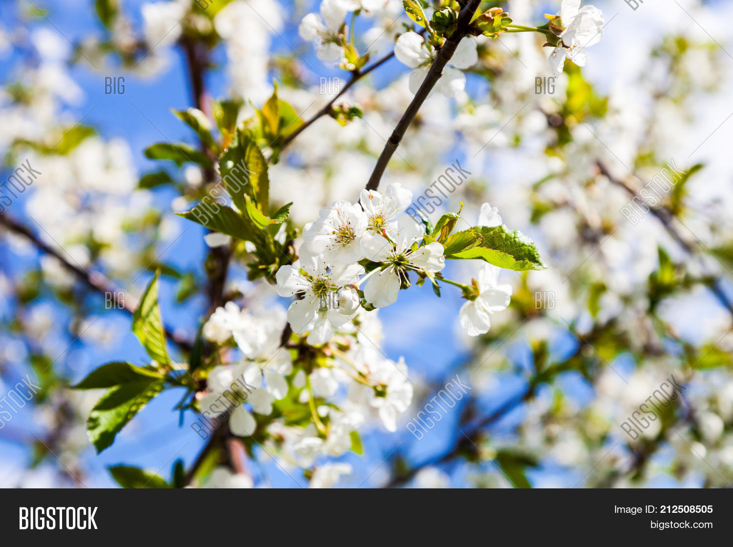 Early Spring White Image Photo Free Trial Bigstock
