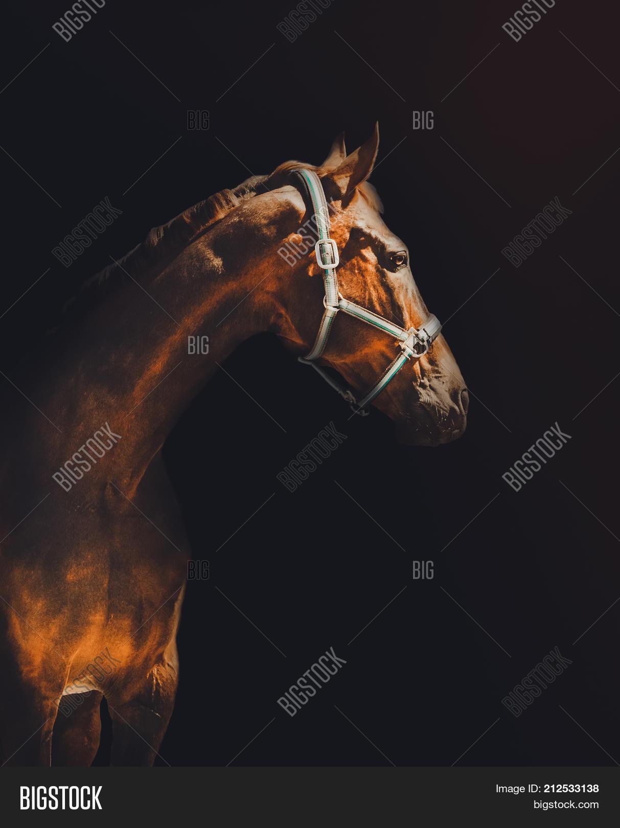 Bay Horse Portrait Image Photo Free Trial Bigstock