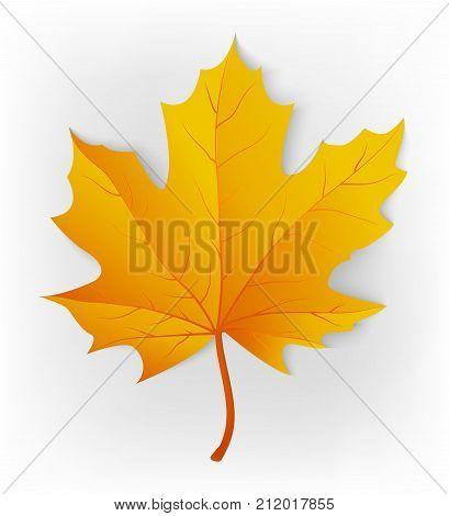 Autumn leaf. Leaf isolated on a white background. Autumn maple leaf. Vector illustration