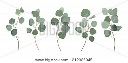 Eucalyptus silver dollar greenery gum tree foliage natural leaves & branches designer art tropical elements set bundle hand drawn in watercolor style. Vector decorative beautiful elegant illustration