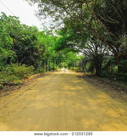 Dirt Road Surrounded By The Forest Known As Estrada Parque Do Pantanal.