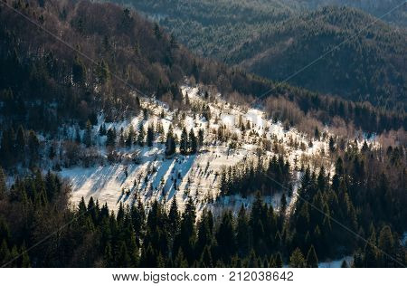 Snow Covered Meadow Among Forest On Hillside