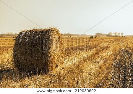 a bale of hay; clean field; sloping wheat; cleaned field; field in the village; first snow; snow in the field