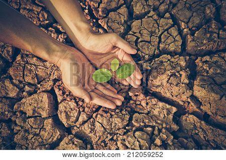 Hands holding a tree on cracked earth / Love and Protect nature from environmental destruction concept