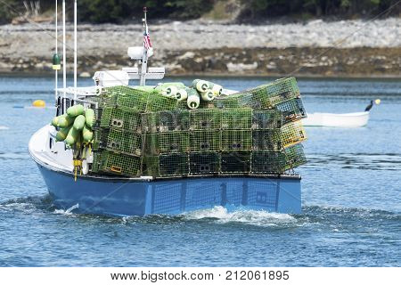 A blue lobster boat full of green lobster traps heading out of Bar Harbor in Maine to set the traps.