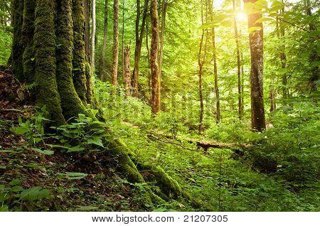 national park Plitvitce