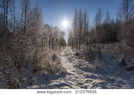 Morning in the forest after the fallen snow