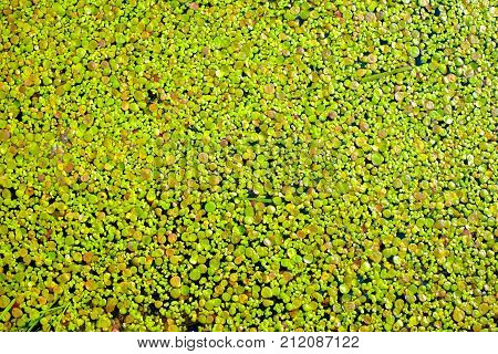 Green Plants On The Water Surface