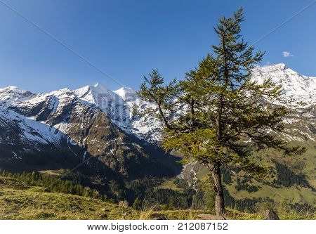 View on the Grosses Wiesbachhorn with snow and fir from the Grosglockner Hochalpenstrasse Austria.