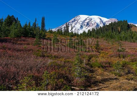 At the paradise valley recreational area several hiking trails climb around the base of Mt Rainier