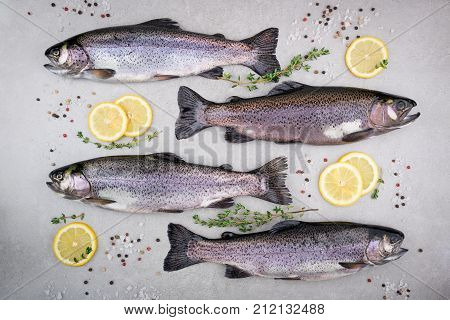Fresh fish. Trout with salt lemon and spices thyme herbs on gray background. Cooking fish with herbs. Top view