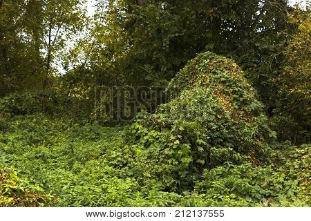 thickets of marsh grass and wild grapes Cane Thicket