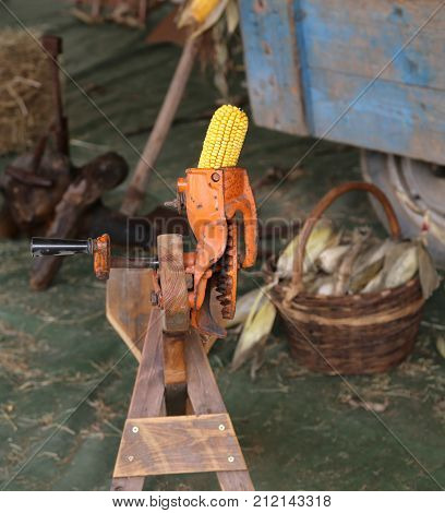 Yellow Corn Cob In An Old Machine To Remove The Seeds