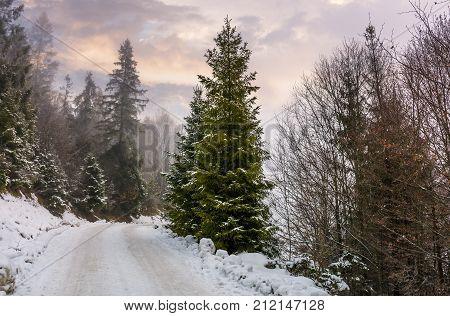 Road Through Snowy Forest On Foggy Morning