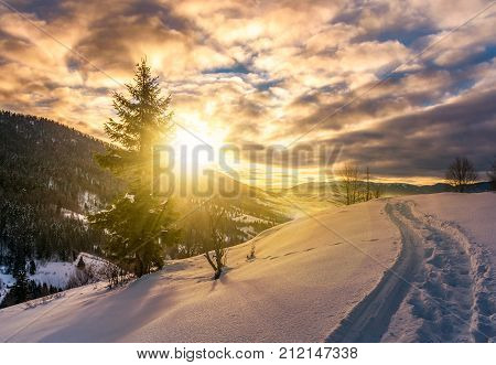Lonely Spruce Tree On Snowy Hillside At Sunrise