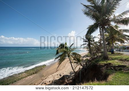 Hatillo Puerto Rico beach scene with palms and emerald green water.