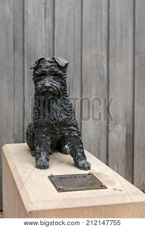 Sydney Australia - March 22 2017: Bronze statue of Biggles a black Miniature Schnauzer dog famous as a rat catcher in Adherden Street in the The Rocks neighborhood. Beige footage and gray wooden wall in back.