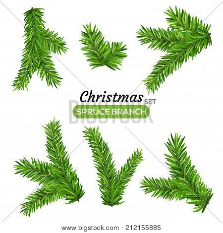 Set of fir branches. Christmas tree or pine branch vector evergreen illustration. Fir isolated holiday decoration.