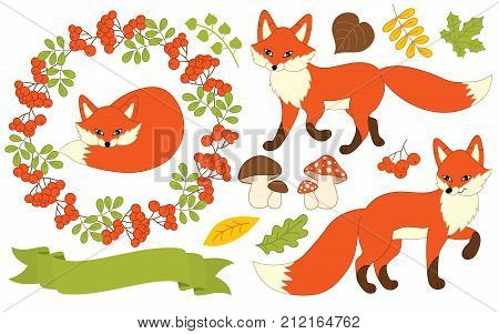 Vector autumn set with cute foxes, leaves, amanita, mushrooms, ribbon, berries  and wreath. Vector fox and autumn plants. Autumn set vector illustration