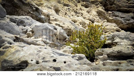 Lonely green plant in desolate rock crevice