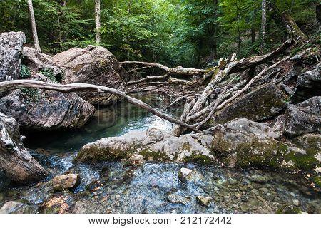 Natural Dam From Fallen Trees On Ulu-uzen River