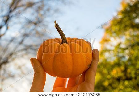 Beautiful Thanksgiving day pumpkin in womans hands held high in sunlight with background of Thanksgiving and fall season trees with leaves changing color and foliage. Healthy holiday eating and fresh outdoor activity inspirational concept background with