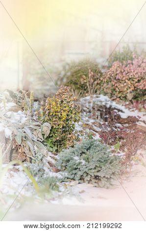 Alpine Slide With Stones In Winter. Fragment Of An Alpine Slide. Snow Covered Garden In Winter