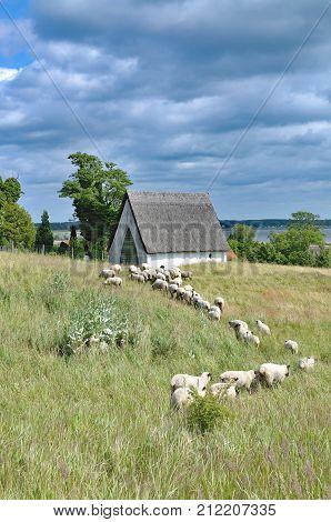 idyllic Landscape on Ruegen in Gross Zicker,baltic Sea,Mecklenburg western pomerania,Germany