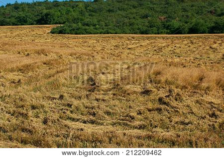 Insure crops. Damage from hurricane crop. Destroyed harvests of wheat.