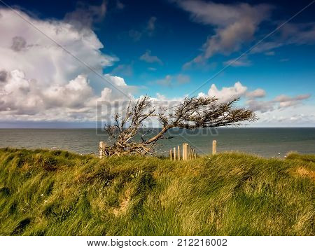 Tree in the wind at the coast of northern Denmark