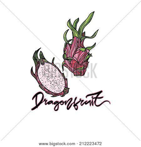 Dragonfruit vector illustration on transparent background.  Hand drawn lettering -