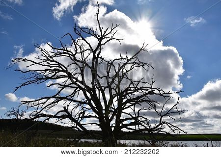 An huge dead tree is silhouetted against the morning sun, blue sky and a white passing could.