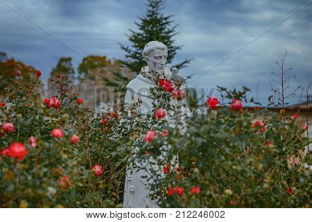 NORWOOD MA, USA - November 1, 2017:  statue of Saint Francis among the roses at the church. statue near Saint Catherine's Catholic Church in Norwood, Massachusetts, USA. statue of a monk with drops of red juice from berries
