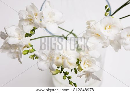 Blossom background of white orchid in vase on light backdrop, close up. Floristics art, tenderness and purity in decoration, luxury gift concept