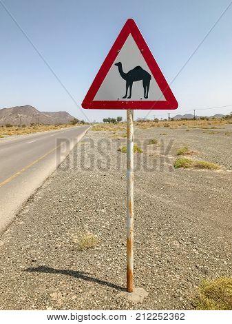 Crossing camel dromedary warning road sign on Oman desert street