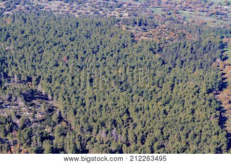 View from Mount Tabor on the coniferous cypress forest in Northern Israel
