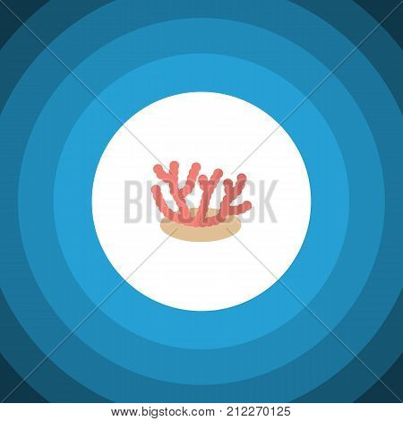 Algae Vector Element Can Be Used For Algae, Coral, Seaweed Design Concept.  Isolated Corals Flat Icon.