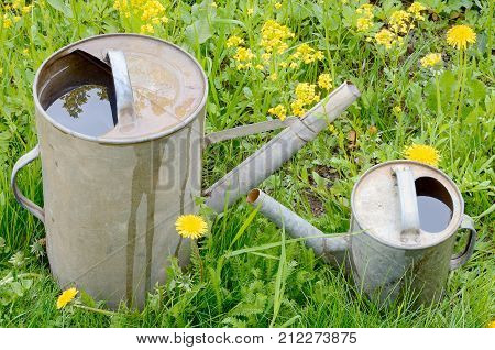 small and large old garden watering cans of galvanized metal on green grass and yellow flowers in summer closeup